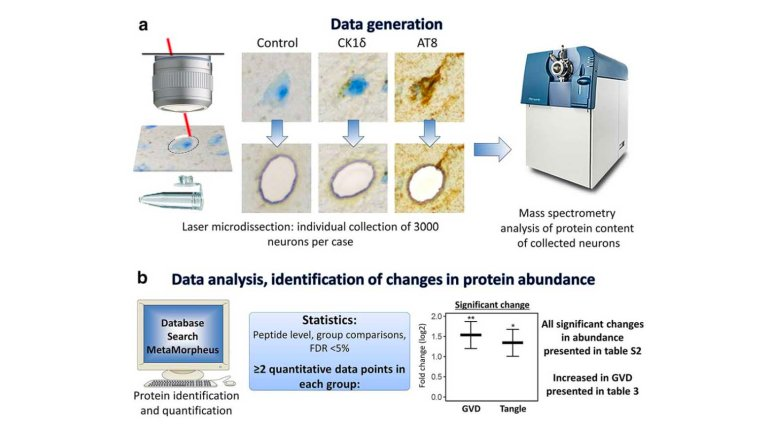 Proces of data generation, identification of changes in protein abundance